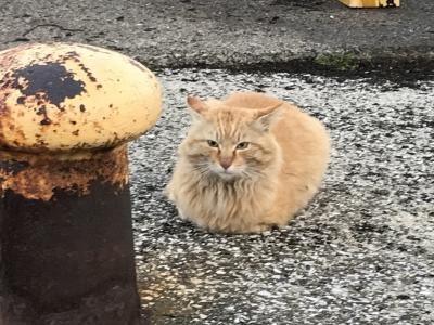 北条湾の猫
