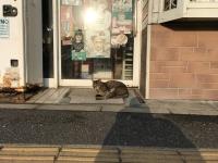 城ヶ島のダメ猫