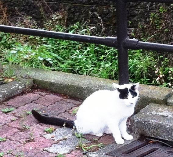 4 緑道のパンダ野良猫