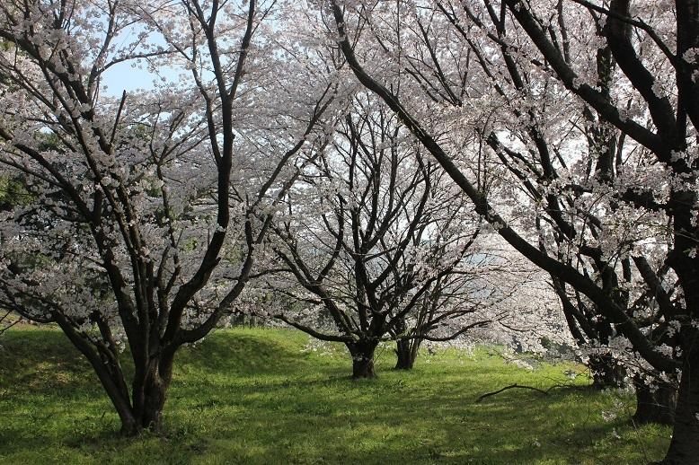2018.4 桜3