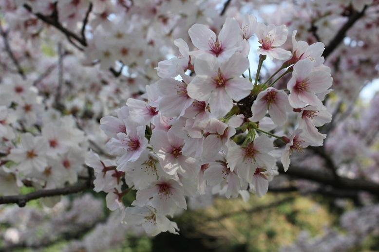 2018.4 桜9