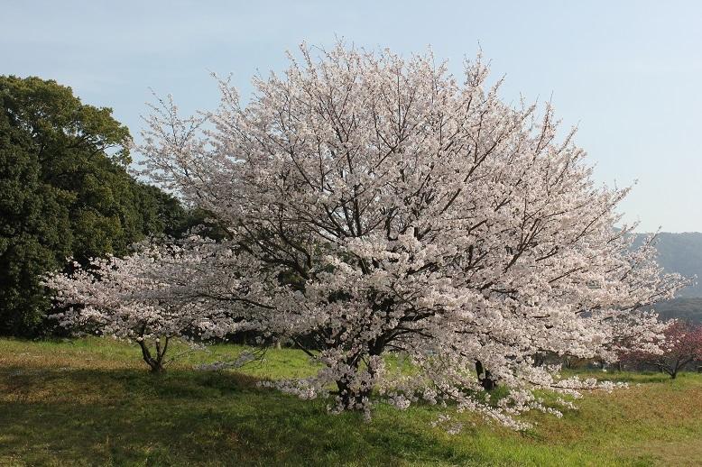 2018.4 桜7