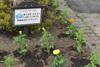2018-06-03 リタロード植栽 (112)