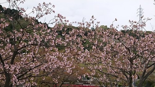 DSC_0007-1024x576名残の桜