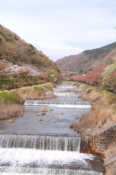 春の旅行 箱根201800048204