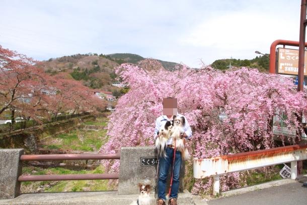 春の旅行 箱根201800048190