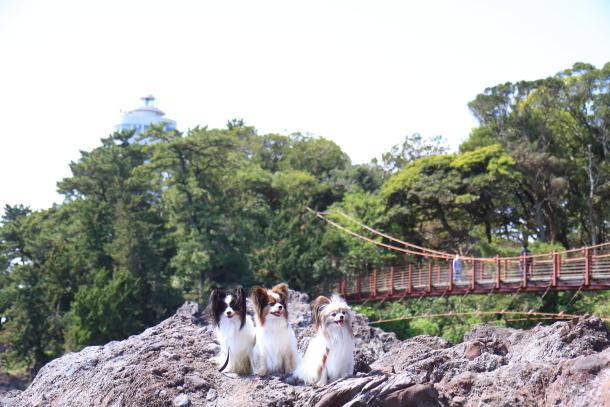 春の旅行 玉響の風 むつみ庵201800048962