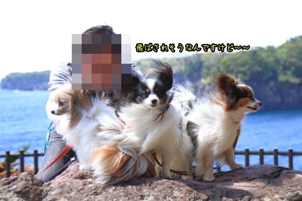 春の旅行 玉響の風 むつみ庵201800048976