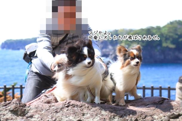 春の旅行 玉響の風 むつみ庵201800048977