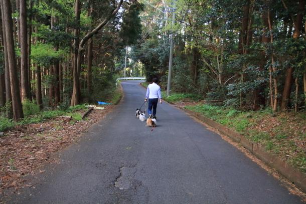 春の旅行 河津七滝201800049380