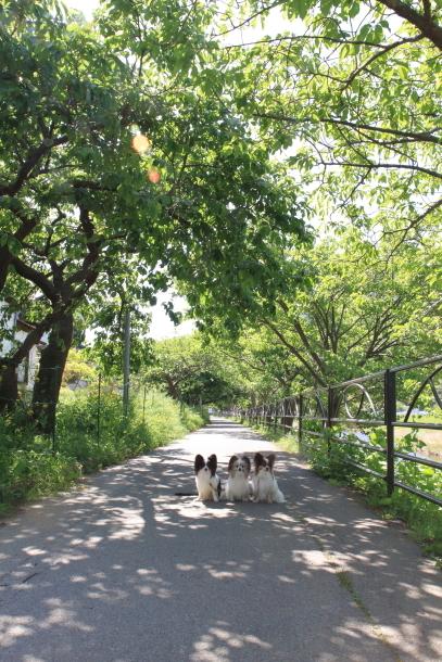 春の旅行 河津七滝201800049470