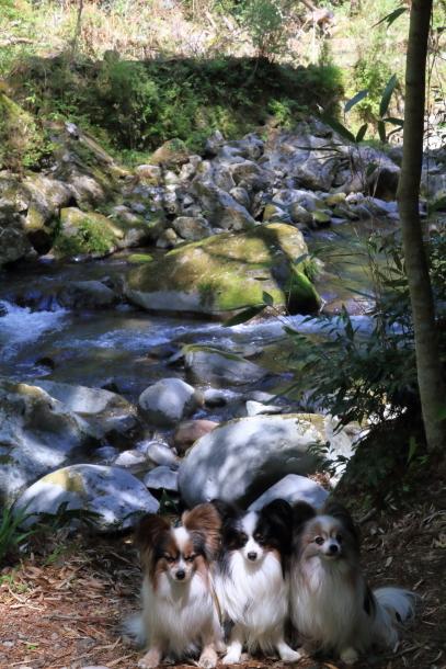 春の旅行 河津七滝201800049480