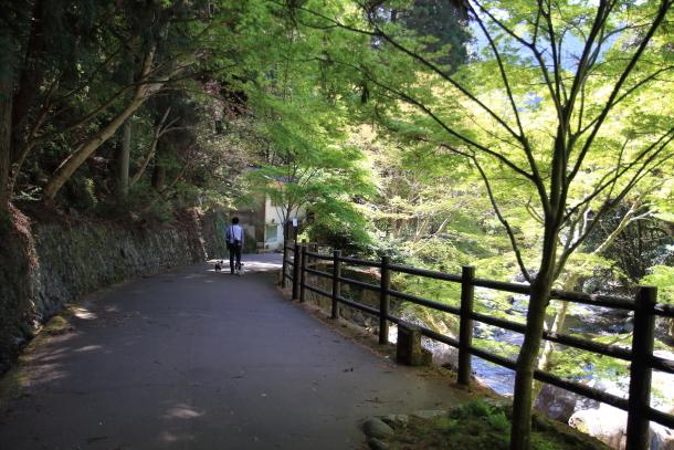 春の旅行 河津七滝201800049521