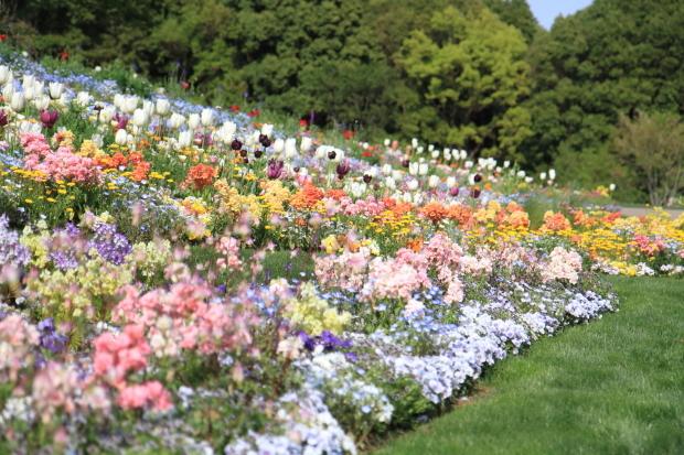 里山ガーデンYOKOHAMA201800049956