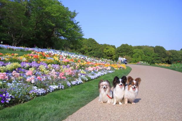 里山ガーデンYOKOHAMA201800049957