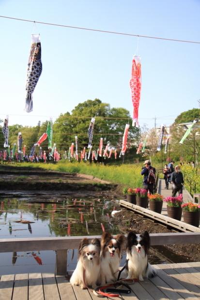 里山ガーデンYOKOHAMA201800049975