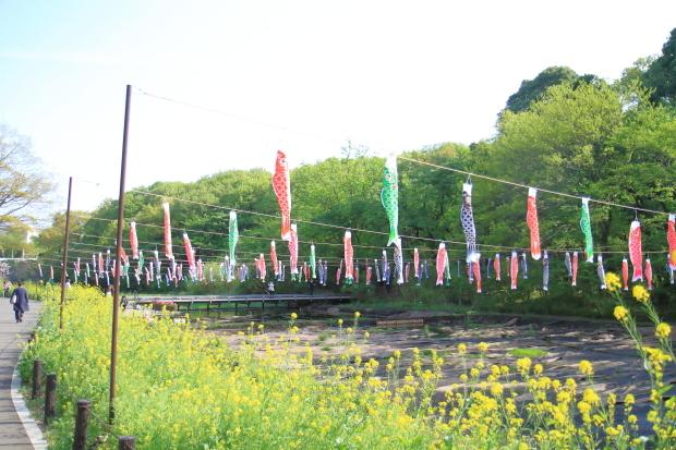 里山ガーデンYOKOHAMA201800049984