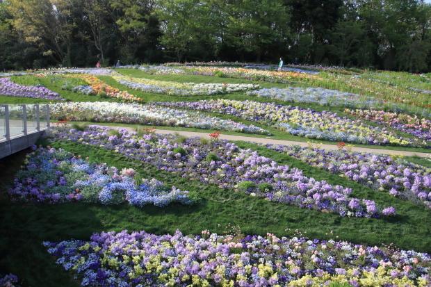 里山ガーデンYOKOHAMA201800050004