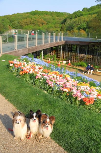 里山ガーデンYOKOHAMA201800050009