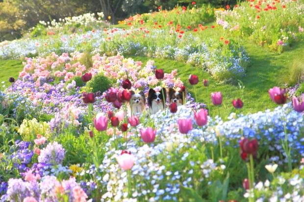里山ガーデンYOKOHAMA201800049923