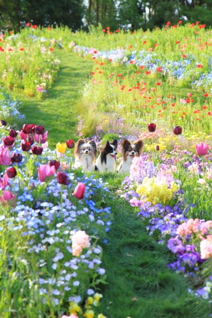 里山ガーデンYOKOHAMA201800050011