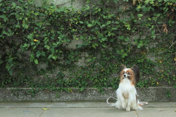IMG_1379犬@写真部 5月犬@写真部 5月
