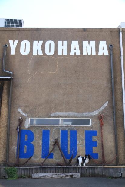 横浜ローズ201800052295