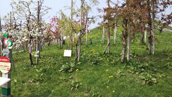 5/2  りんごの木  りんご公園  弘前市