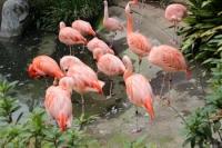 3/24 フラミンゴ  野毛山動物園