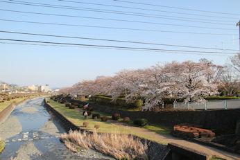 3/25 カルチャーパーク付近の桜
