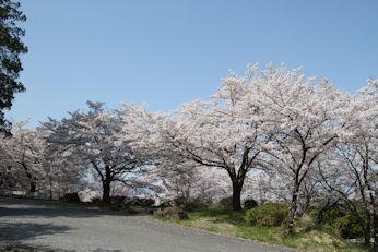 3/31   大法師桜まつり 公園への道