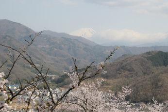 3/31   会場途中から見えた富士山 大法師桜まつり
