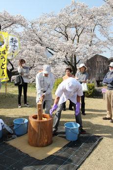 3/31 柚子餅つき  大法師桜まつり
