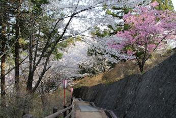 3/31   大法師公園からの帰り道 階段