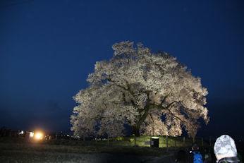 3/31  ライトアップ わに塚の桜  韮崎市