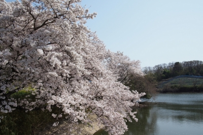 Amano_Kaguyama_1803-903.jpg
