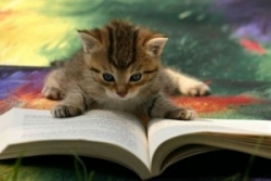 cat_books_011-300x200.jpg