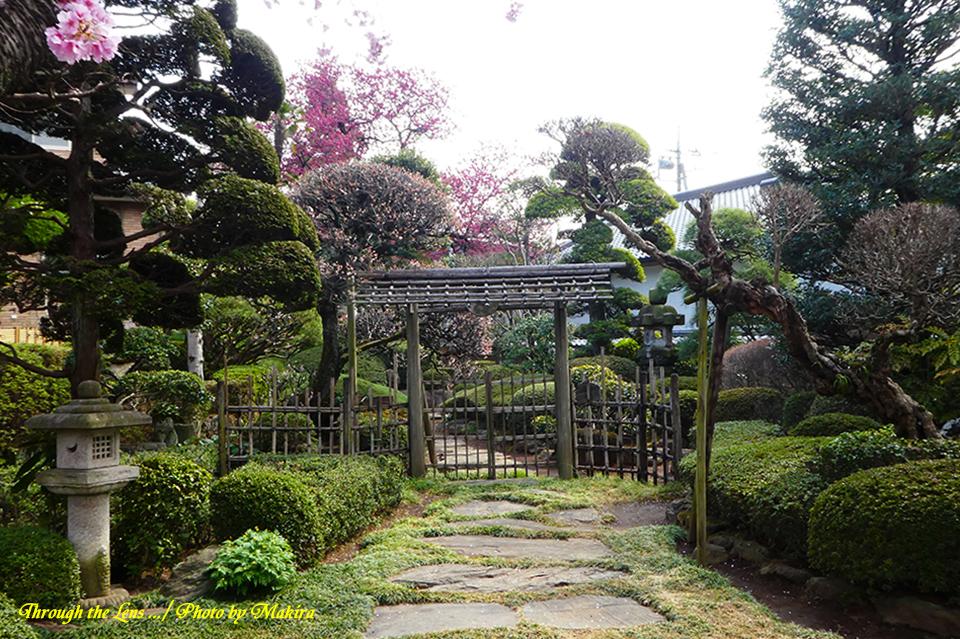 庭園TZ1