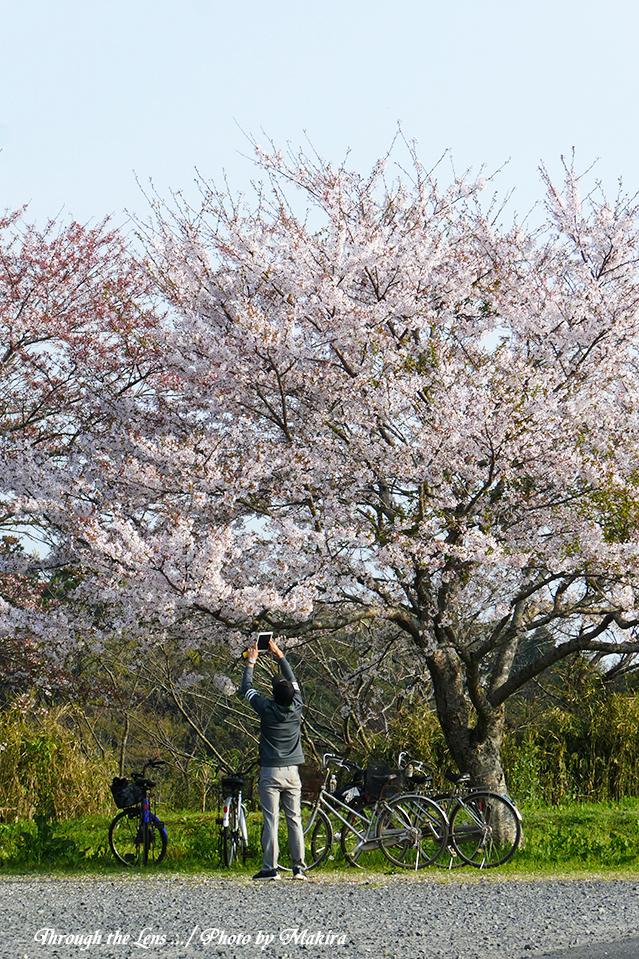 西蓮寺桜TZ7