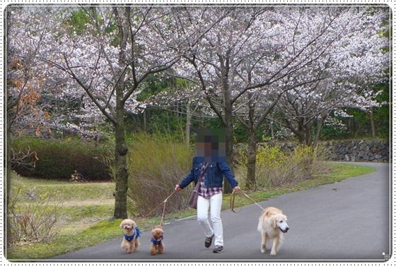 2018,4,2お散歩3