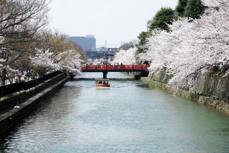 2018_kyoto_sakura_12.jpg