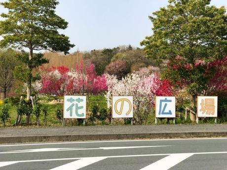 san_a_9.jpg