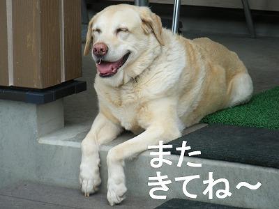 15あい笑顔