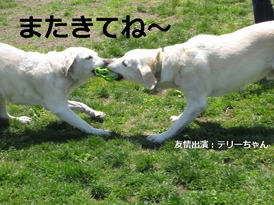 IMG_5633_1.jpg
