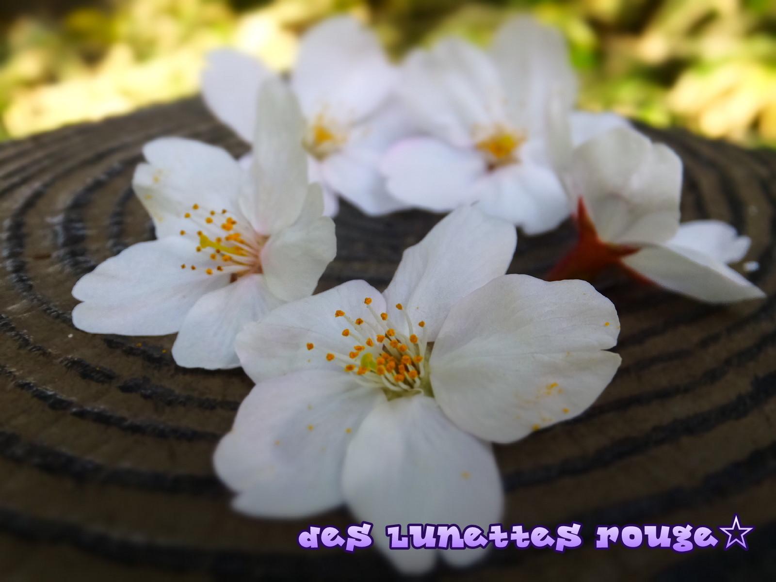 雀に落とされた桜