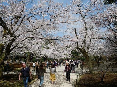 0414katsurazaka01.jpg