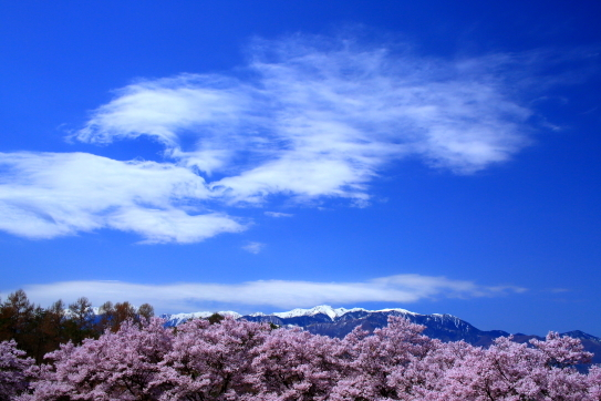 白銀の中央アルプスと桜の森を彩る雲