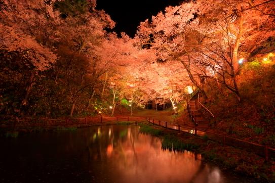 高遠城址公園のお堀に映える夜桜