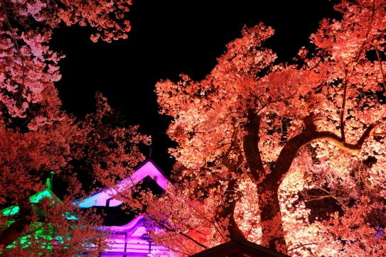 高遠閣の夜桜