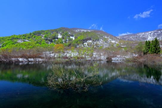 残雪とブナの若葉映える池